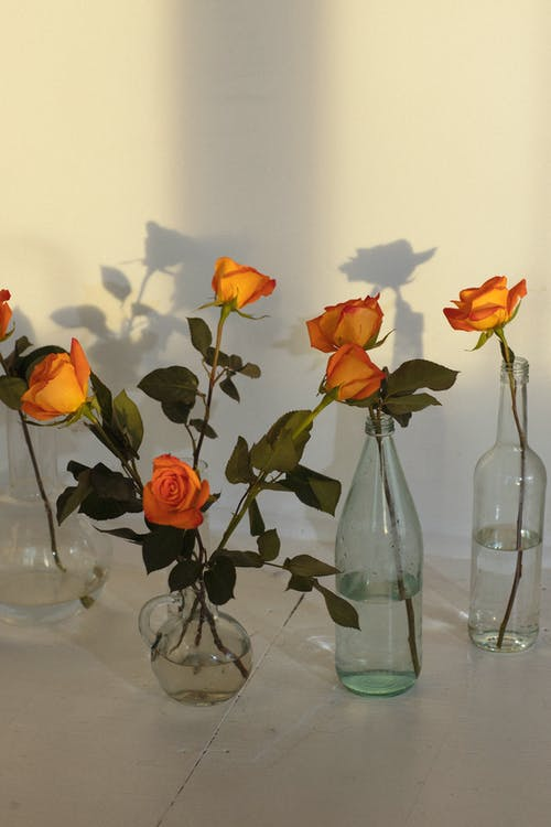 Colorful blooming flowers with gentle petals and thin stems in vases with water against wall with shadows