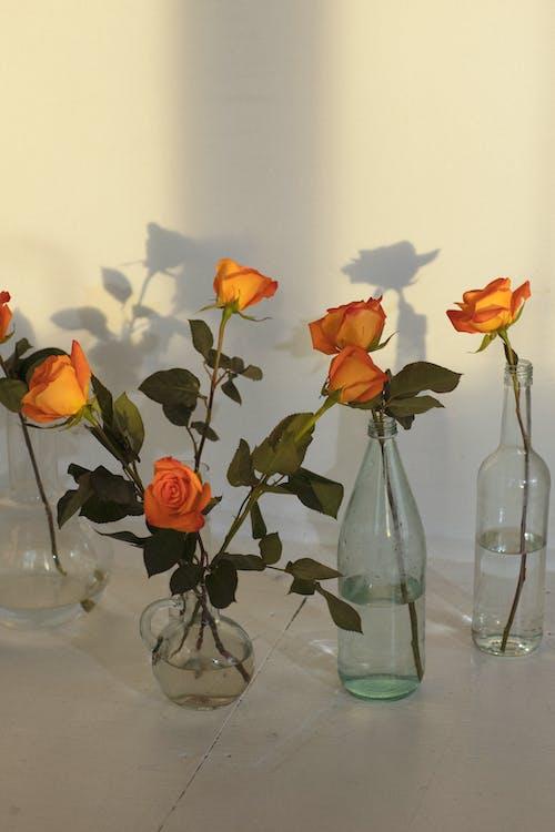 Gratis lagerfoto af aroma, arrangement, assorteret