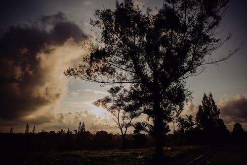 Бесплатное стоковое фото с вечер, дерево, за городом, закат