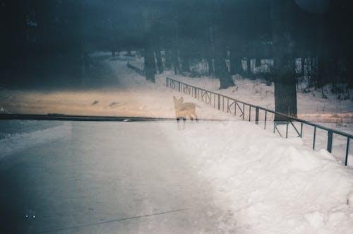 Foto profissional grátis de 28mm, 35 mm, água, ao ar livre