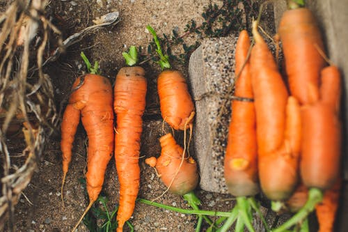 Orange Carrots on Gray Concrete