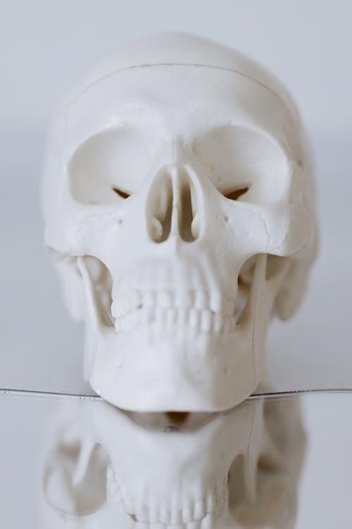 White Skull on White Ceramic Tile