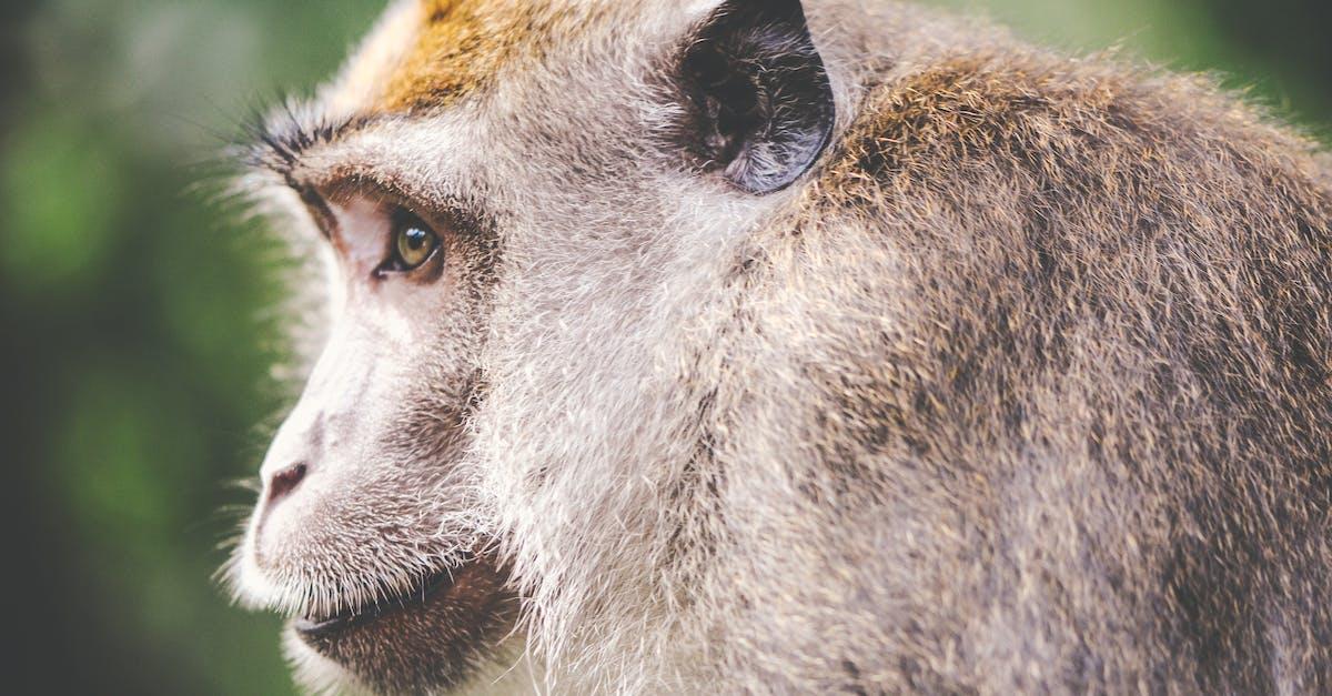Free stock photo of animal, monkey, wilderness