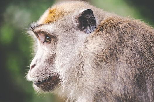 Free stock photo of animal, wilderness, zoo, monkey