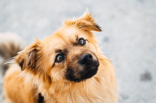 おもしろい, シャギー, ペットの無料の写真素材