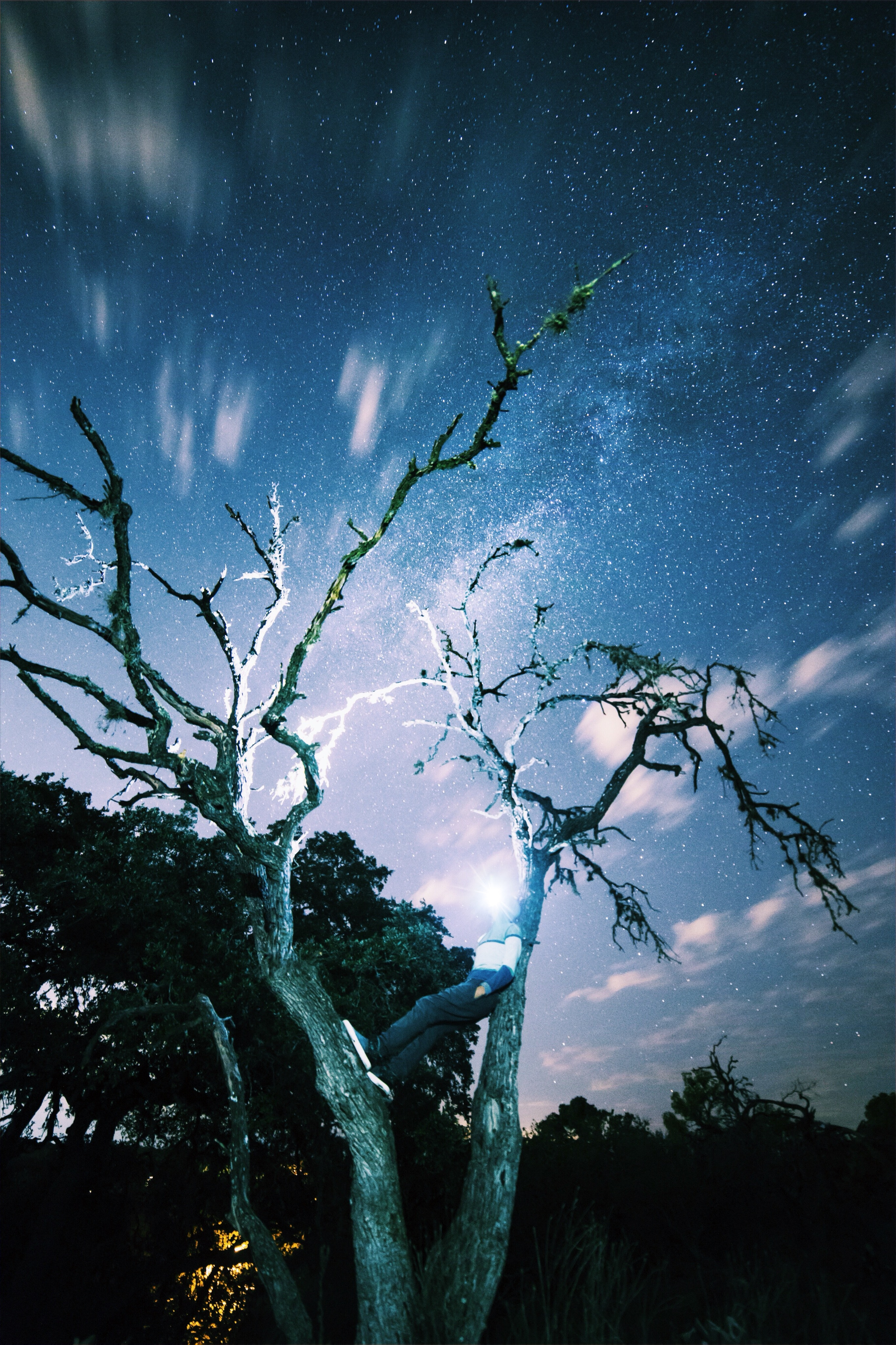Worm S Eye View Of Green Trees Under Blue Clear Night Sky