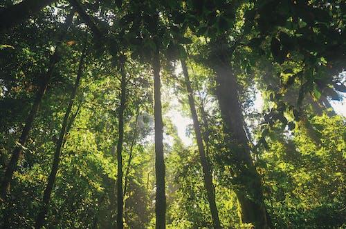 Δωρεάν στοκ φωτογραφιών με δασικός, δέντρα, ζούγκλα, ηλιόλουστος