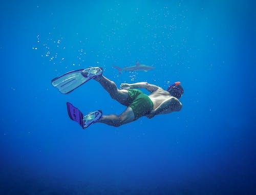 Photos gratuites de amoureux de la nature, animal aquatique, aquatique