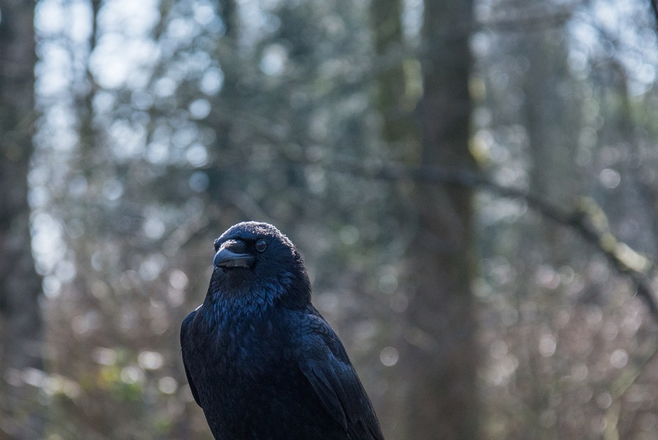 Black Bird Surrounded by Trees during Daytime