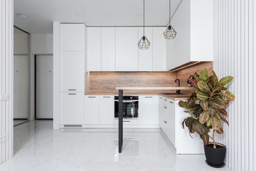 Interior of contemporary white kitchen decorated with potted fire croton plant