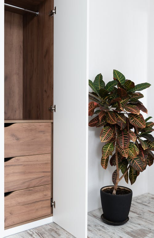 Exotic fresh Codiaeum variegatum plant in pot placed on laminate floor near wooden wardrobe with white doors