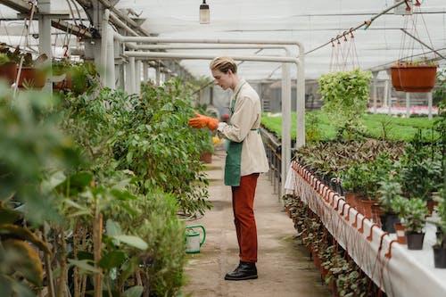 Man Checking on His Plants