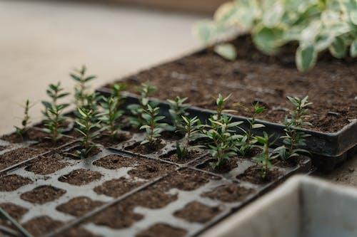 オーガニック, 園芸, 土壌の無料の写真素材