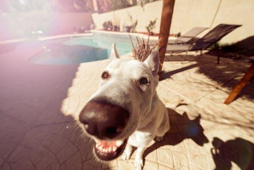 Δωρεάν στοκ φωτογραφιών με δάγκωμα, ζώο, κατοικίδιο, μουσούδα