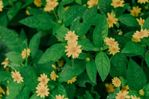 Blooming yellow flowers growing in green foliage