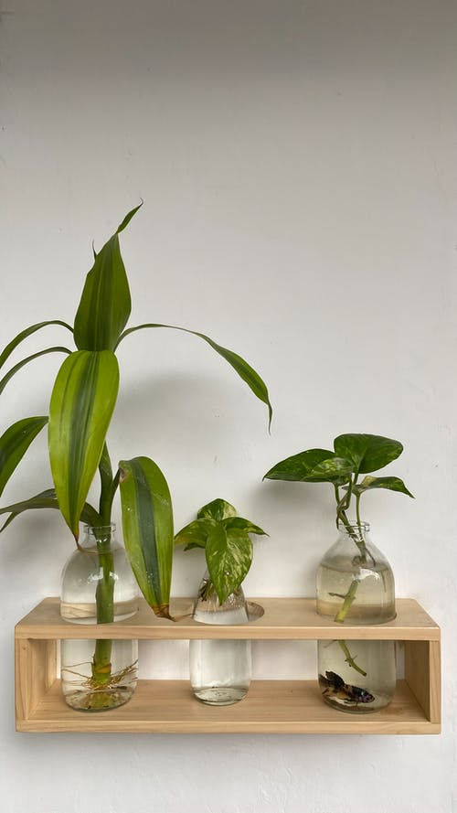 Shelf with seedling in glass vases