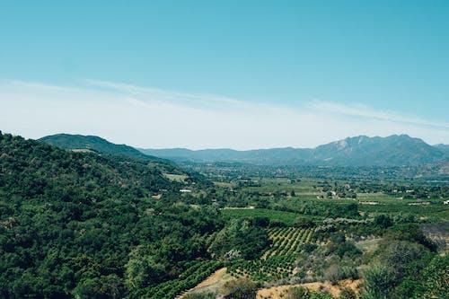 Foto stok gratis kebun anggur, lansekap