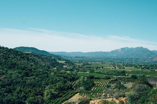Free stock photo of landscape, vineyard