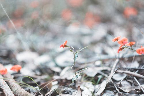 Small fragrant red flowers blossoming on grassy meadow on blurred nature background in daylight