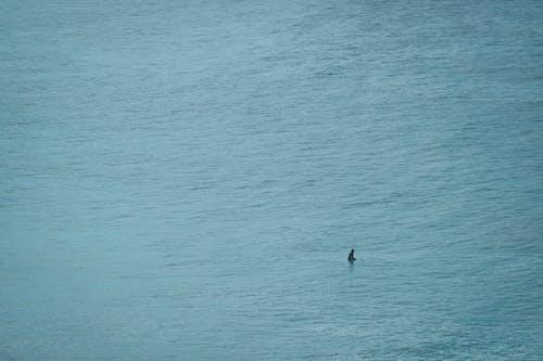 Shark swimming in rippling blue ocean