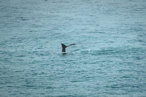 Whale swimming underwater of wavy ocean