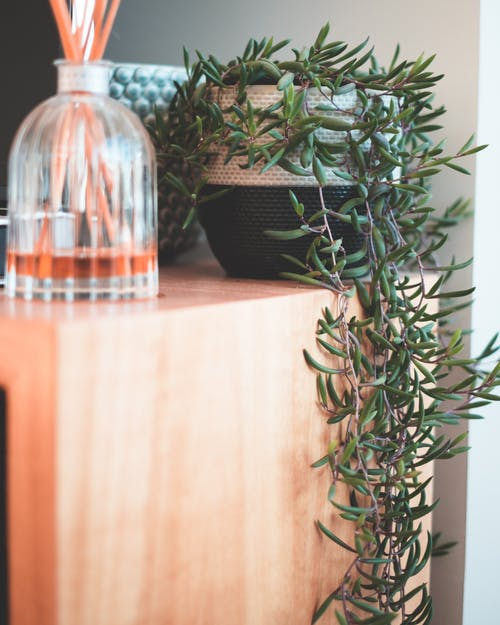 Potted plant with hanging fresh verdant leaves composed with glass flask with incense sticks