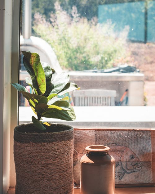 Green potted plant with fresh leaves near painting on window