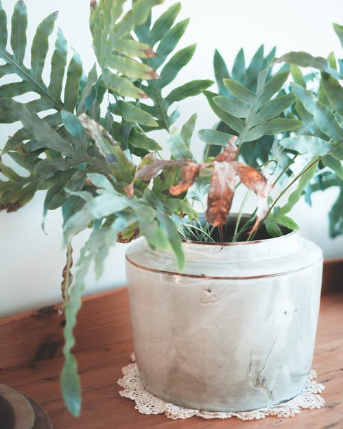 Fresh verdant plant growing in pot on wooden table of lounge in daytime