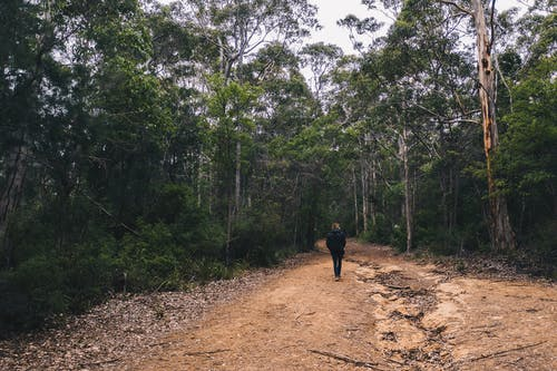 Person walking in green forest in daytime