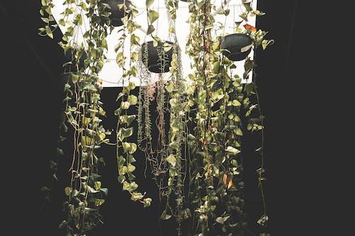 Green plants in hanging pots in dark room