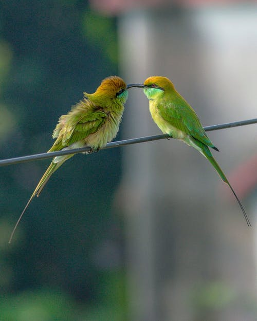 Green and Brown Bird on Green Wire