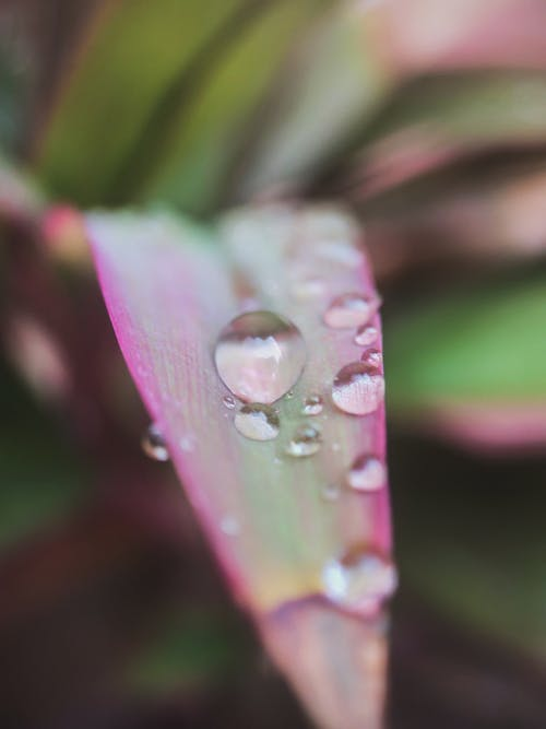 Free stock photo of leaf, water drop