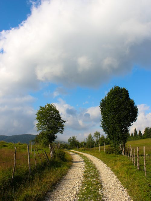 Unpaved Road Between Green Grass Field and Trees Under Cloudy Sky