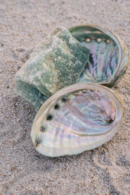 Kostnadsfri bild av mussla, närbild, skal
