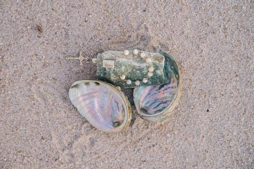 Kostnadsfri bild av mussla, närbild, overhead shot