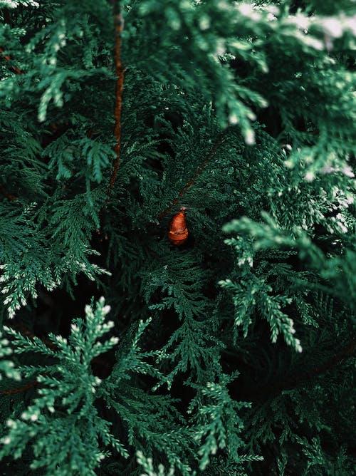 特寫, 紋理, 自然生活, 蝴蝶昆蟲 的 免費圖庫相片