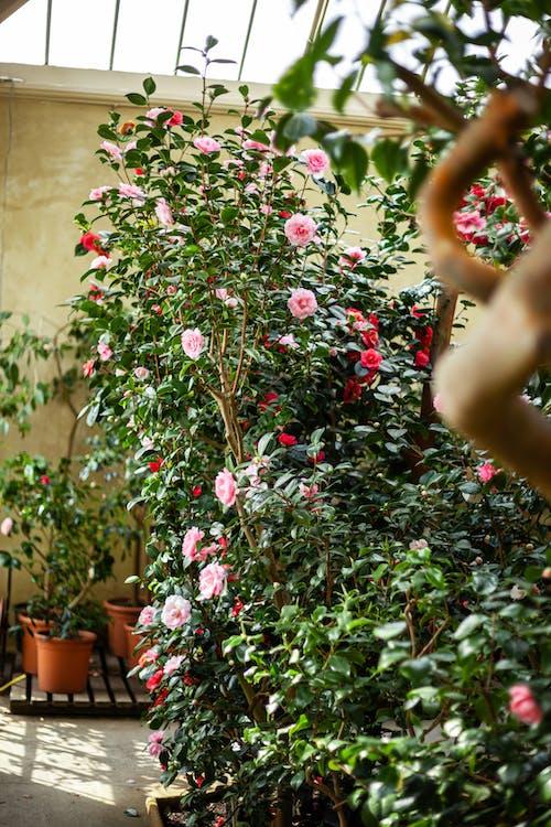 Free stock photo of atmospheric, botanical, botanical garden