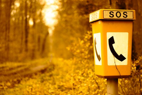 Photos gratuites de forêt automne, forêt d'automne, urgence
