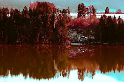 Photos gratuites de coloré, effet miroir, forêt