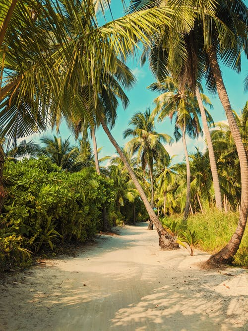 Tropical palms growing on sandy ground