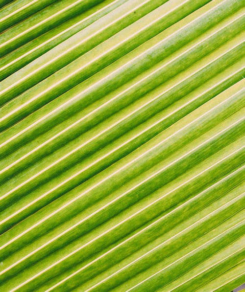 Texture of green exotic palm