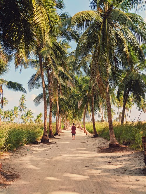 Unrecognizable person walking on sandy road among palms