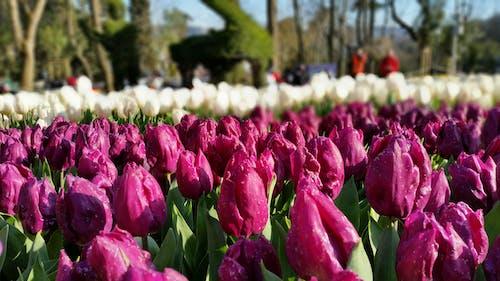 Foto d'estoc gratuïta de Festival, flora, floral, flors