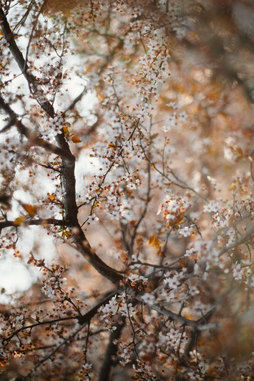 Thin branches of tree with small gentle flowers with white petals growing in forest on blurred background during blooming season