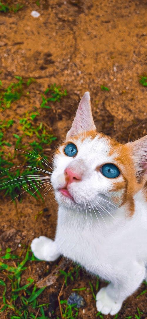 Free stock photo of android wallpaper, animal eye, animal portrait