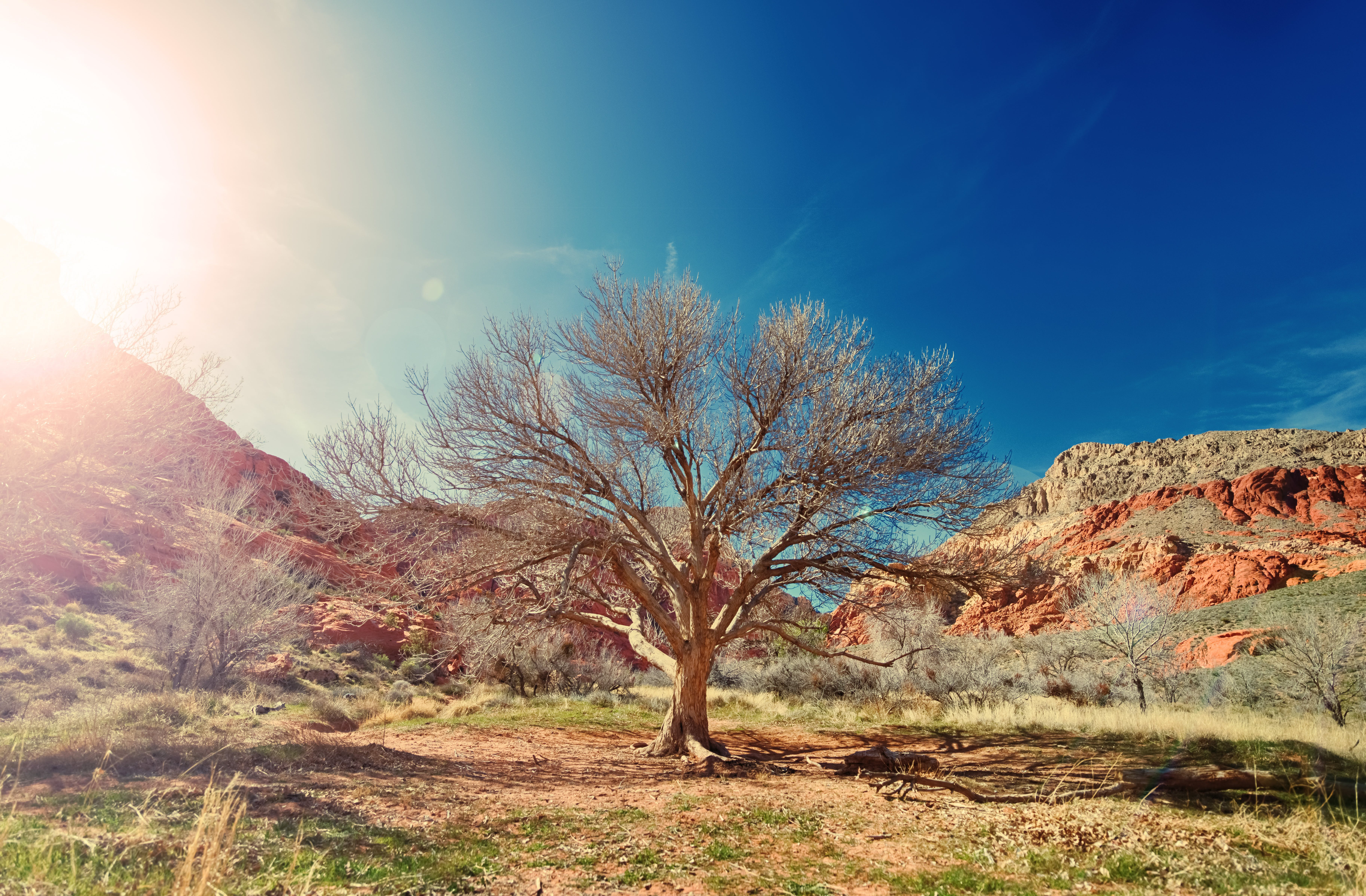 Brown Bare Tree Near Brown Rocky Mountains Under Blue Sky