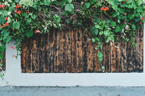 Základová fotografie zdarma na téma plot