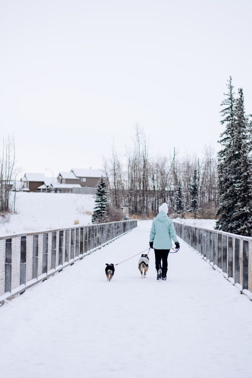 Person Walking the Dogs