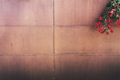 Foto stok gratis pagar, ruang putih