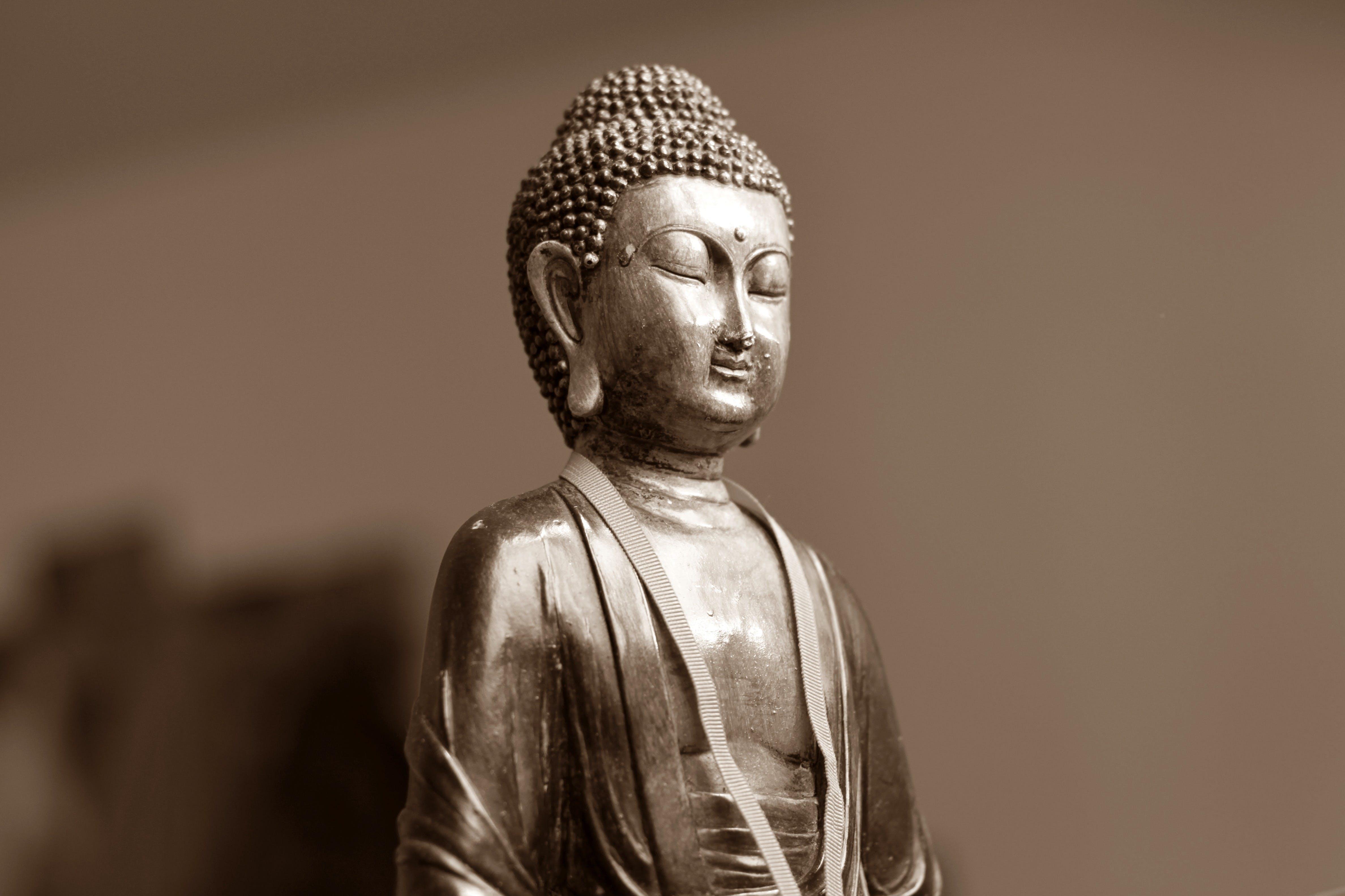 buddha, buddhismus, fokus